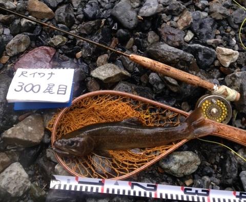 2018/07/21 天竜水系 イワナ33cm ハスラー様