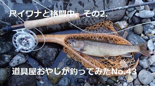 2021/5/31 イワナ31cm 庄川 道具屋おやじ